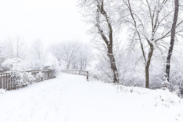 Tom Schmidt Photo in Buffalo Grove Chicago