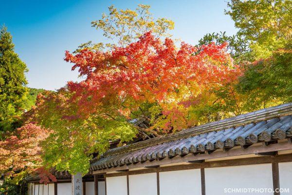 many zen gardens hidden in these temples - 48