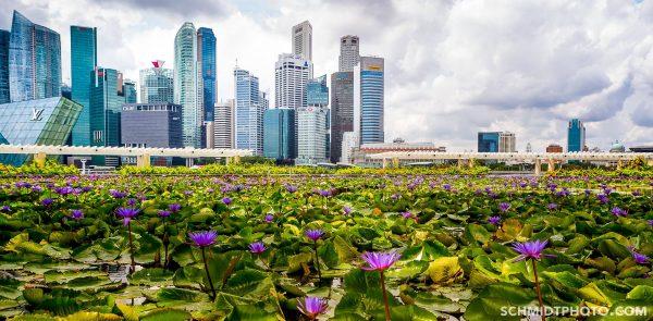 Singapore Island City Travel Blog Wander with Tom Schmidt Priscilla - 16