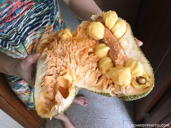 Singapore Island City Travel Blog Wander with Tom Schmidt Priscilla - 00