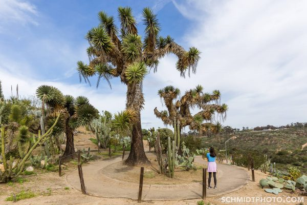 Wander with Tom Travel Blog San Diego Tourism schmidt photo - 34